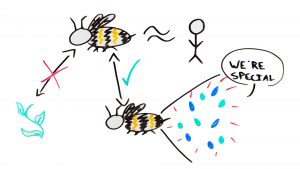 Honeybee microbiota are similar to human ones