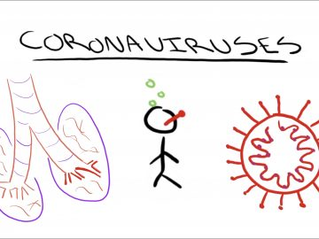 Lung with the bronchial tubes highlighted, a sick person, and an image of a coronavirus with the word coronaviruses over the top